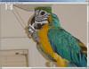 LEADTOOLS Imaging Pro SDK 17.0 released